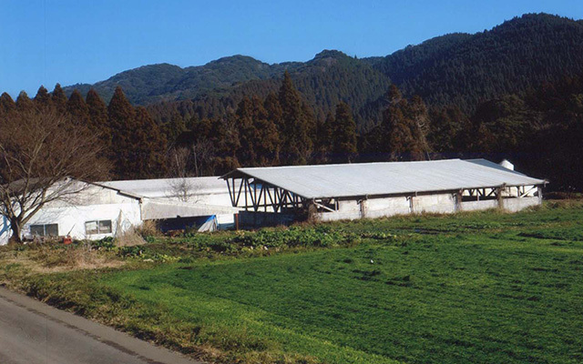 有機栽培の牧草、麦等、これらの作物を飼料として与え、健康な豚を育成しました。