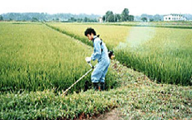 稲を育てます。草刈り